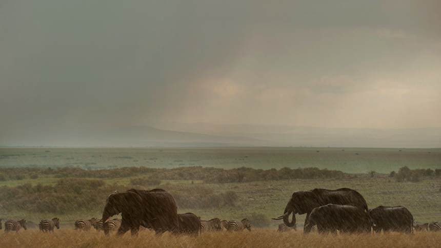 Rains in Masai mara