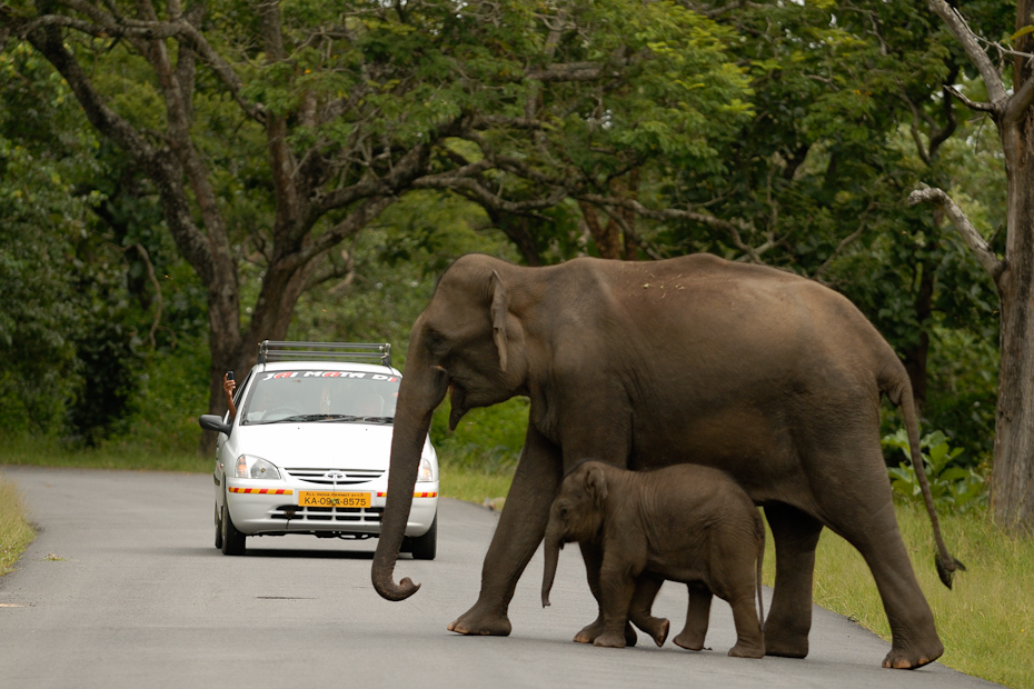 Linear intrusions like roads create barriers for movement of wildlife. Every year many endangered species fall victim to road accidents. Shutting down traffic on these roads in the night could help a bit.