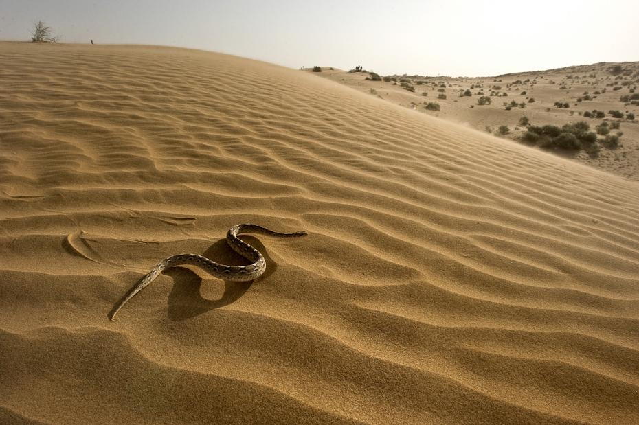 Under The Sand Movie Online