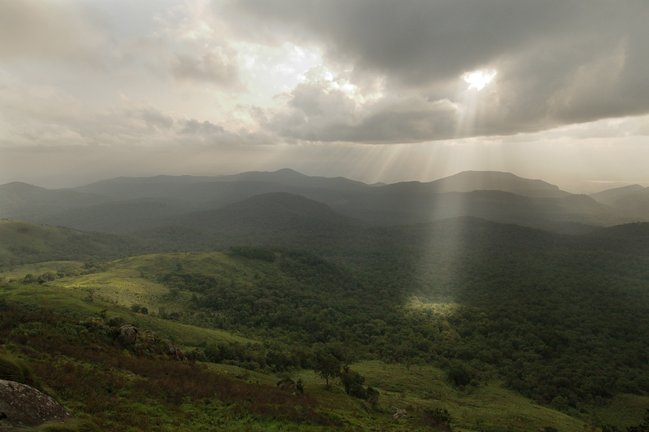 A swathe of decidious forests in BR Hills, Karnataka.
