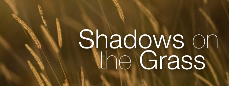 Photo-essay: Shadows on the Grass