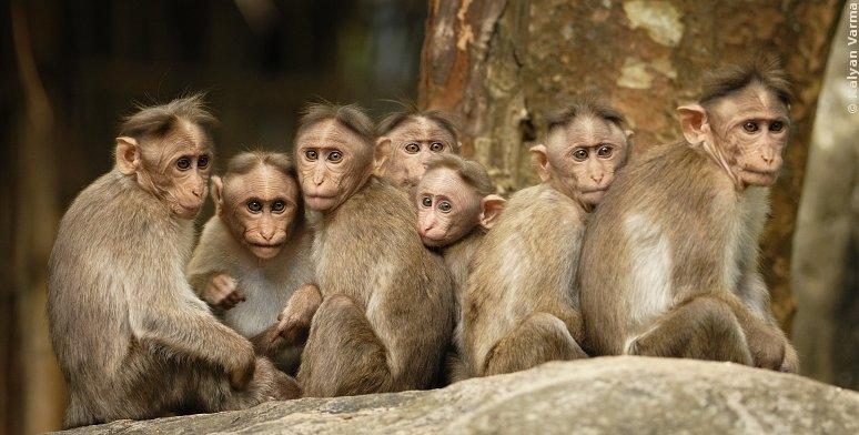 brt_monkeys_congrigation_429.jpg