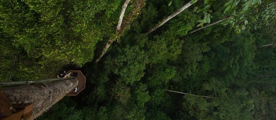 Borneo Rainforest Expedition
